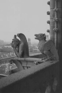 Notre Dame cathedral gargoyle and chimera