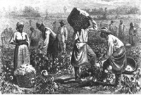 Slaves in the cotton field